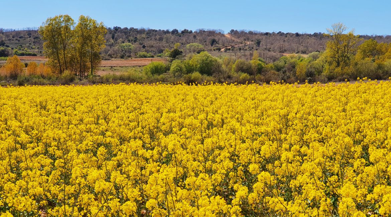 Flores Villares de Órbigo